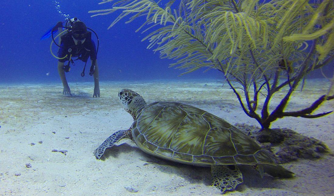 Plongée Sous-Marine en Crète